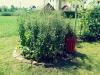 c5a1ol-vrt-l